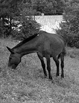Horse outside town