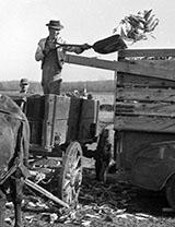 Corn farmers
