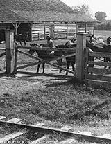 Group on a plantation