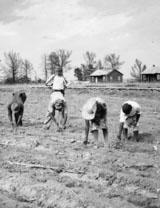 Planting crop