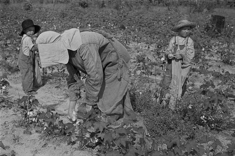 Woman and children picking cotton