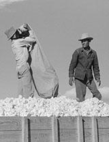 Mexican Seasonal Laborers