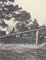 A One-Mule-Power Cane Press